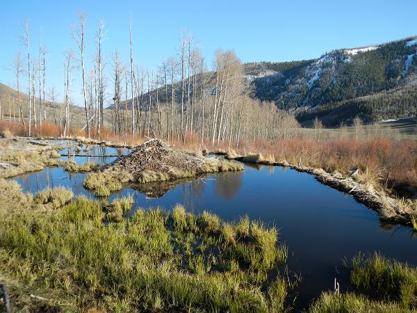 Utah water log strawberry and deer creek for Deer creek fishing
