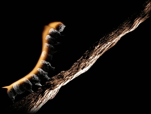 17-Match-Caterpillar-Flame-Russian-Photographer-Illustrator-Stanislav-Aristov-PolTergejst-www-designstack-co