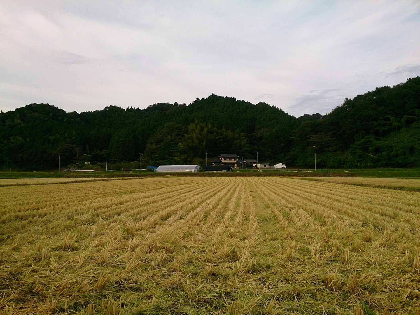 稲刈り後の田んぼ