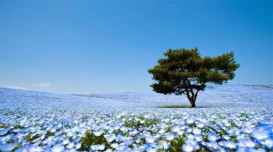 [Image: nhung-thien-duong-hoa-no-thang-5-nhat-ban-4.jpg]