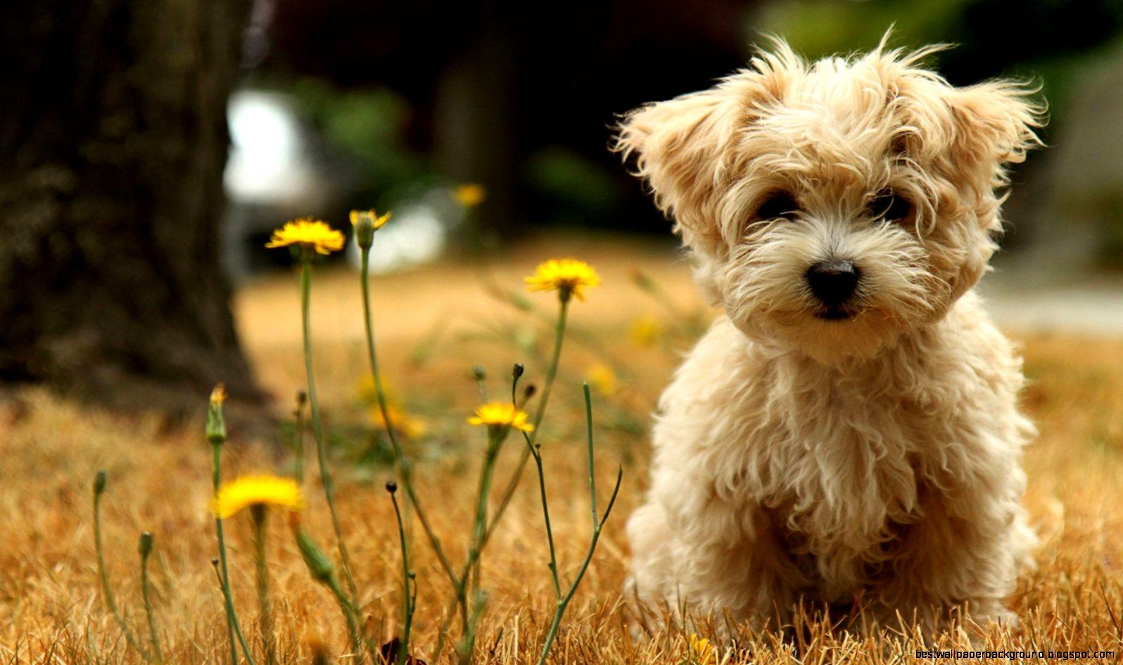 Puppy Wallpaper Widescreen