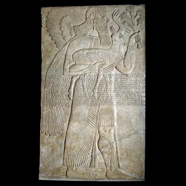 """Nimrud (antigua Kalhu), el norte de Irak Neo-asirio, 883 a 859 aC  Un espíritu protector  El relieve, tallada en yeso, custodiada una entrada en la sala del trono de Asurnasirpal II (reinó 883-859 aC) en su palacio de Nimrud (antigua Kalhu, la capital asiria). La tradición de la protección de las entradas de los edificios que usan la magia era muy antiguo en Mesopotamia. Imágenes de criaturas sobrenaturales serían enterrados debajo de las puertas o la creación en las entradas de los palacios y templos. Su fuerza mágica suponía sería ahuyentar a los demonios malévolos.  Esta figura de un hombre con alas puede ser la criatura sobrenatural conocida como Apkallu. La importancia de los ciervos y rama que lleva la cifra se desconoce. Lleva una falda escocesa con borlas y un manto de flecos y bordado, mientras que el bigote rizado y el pelo largo y la barba es típico de las cifras de esta fecha. Al otro lado del cuerpo se ejecuta el llamado 'inscripción estándar """"de Assurnasirpal que registra algunos de los títulos y logros del rey, y se repite en muchos de sus relieves en piedra. Este texto cuneiforme fue cortado después de la figura fue tallada como algunos de los detalles de la decoración en el vestido se han cincelado a través"""