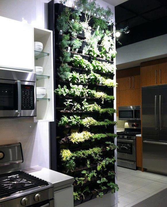 Wish Wednesdays: Indoor Wall Planter for Herbs - Lake Luv: Wish Wednesdays: Indoor Wall Planter For Herbs
