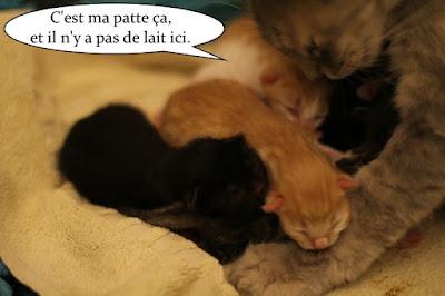 Maman chatte et sa portée de chatons.