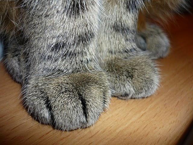 Fuzzy cat paws.