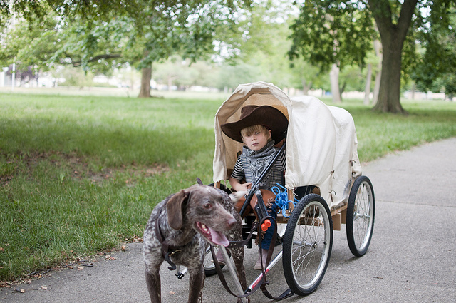Pictures Of Dogs Pulling Carts
