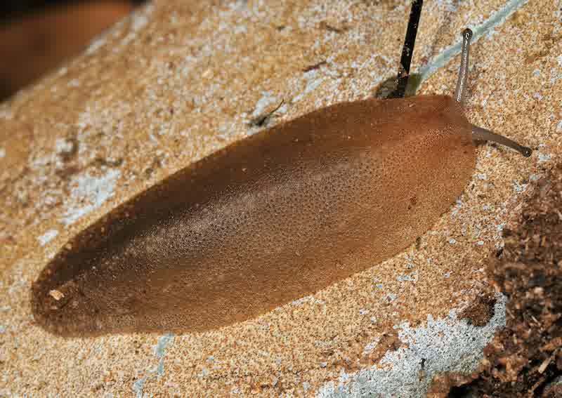 Ini Dia Ciri-Ciri dan Klasifikasi Mollusca   Pengetahuanku ...