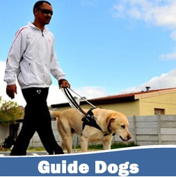 guide dogs for the blind flickr