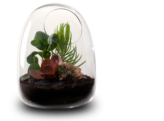 hvh interiors mini terrariums have decor appeal. Black Bedroom Furniture Sets. Home Design Ideas
