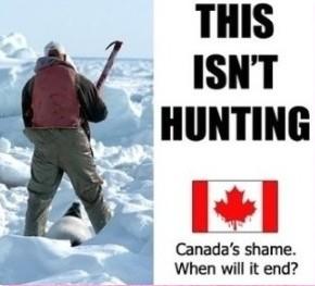 کشتار وحشیانه بچه فک ها در کانادا شروع شد