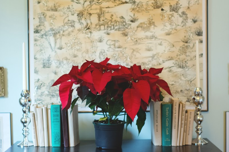 lowes poinsettia