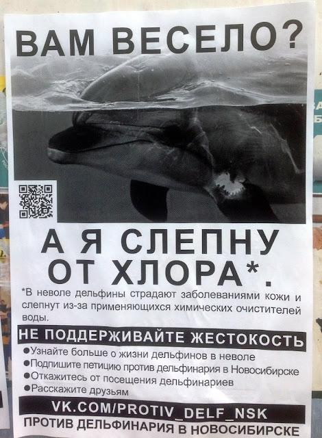 фото петиция против передвежнных дельфинариев успели