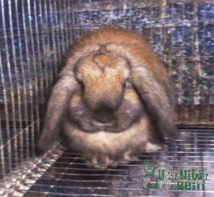 Sleeping Time - gallery uraniwarabbit