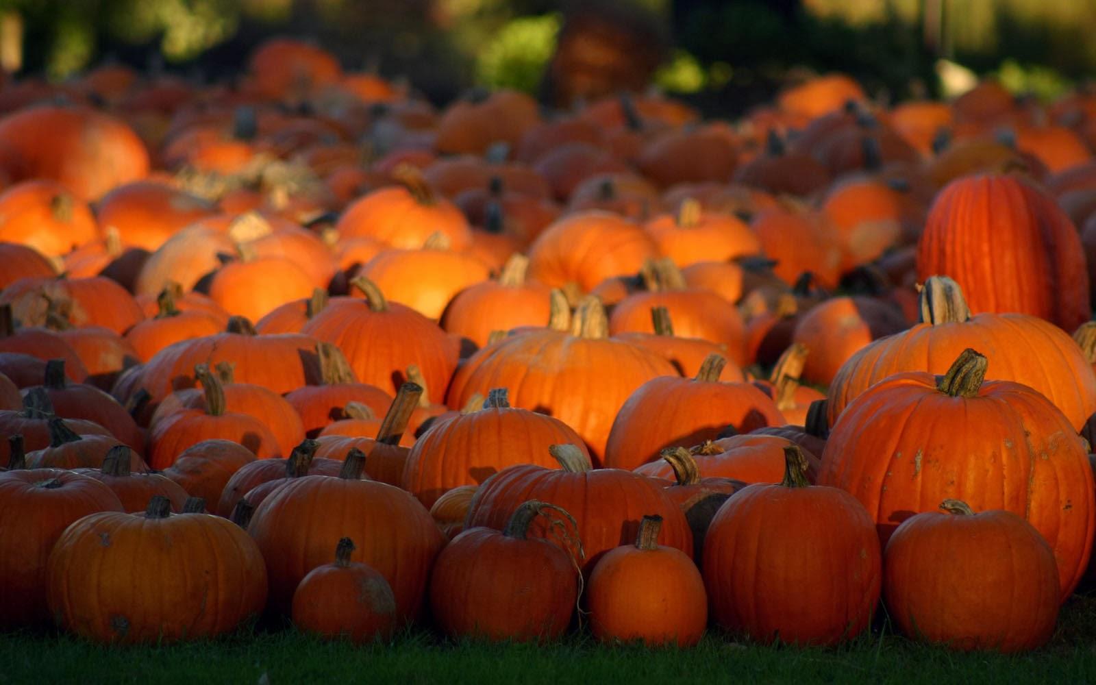 3d pumpkin wallpaper - photo #30