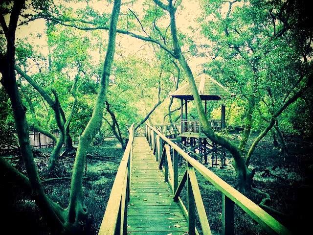 Wisata Hutan Bakau Margomulyo Di Balikpapan