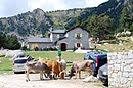 Refugio de Malniu, pirineo catalán