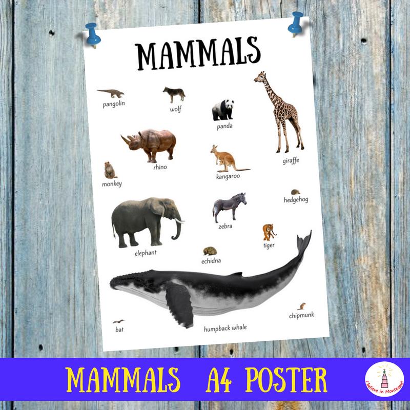 Mammals A4 Poster