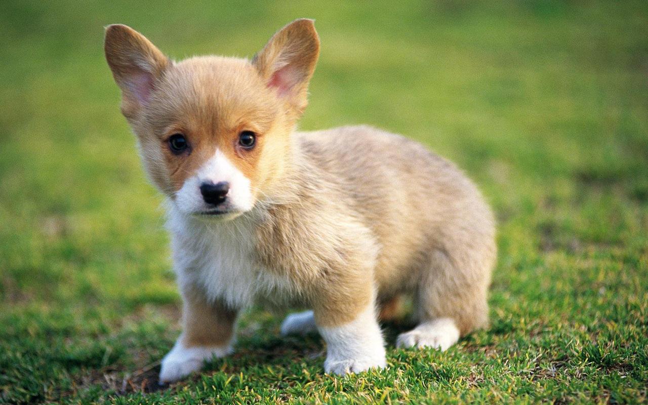 Cute-Puppies-puppies-22040876-1280-800.j