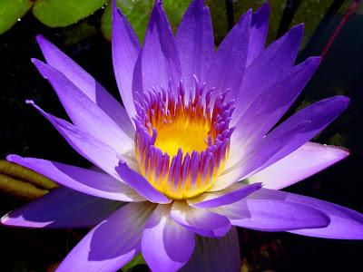 Cvijet download besplatne pozadine slike za desktop