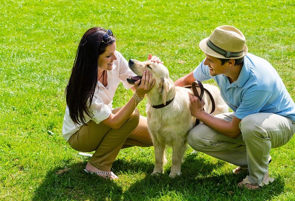 Cómo saber si mi perro me quiere: cuidados y nombres para tu mascota. Perro sonriendo