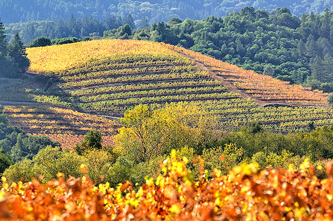 Fall in the vineyards.