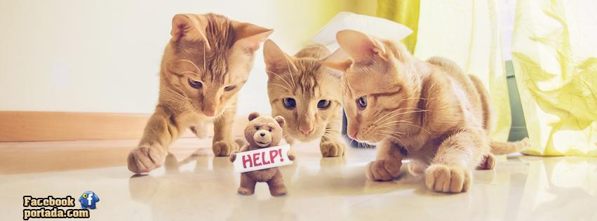 Oso Ted y gatos
