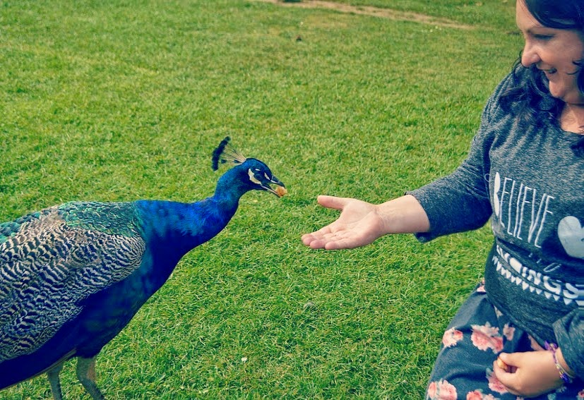 Annas Welsh Zoo Pembrokeshire Wales