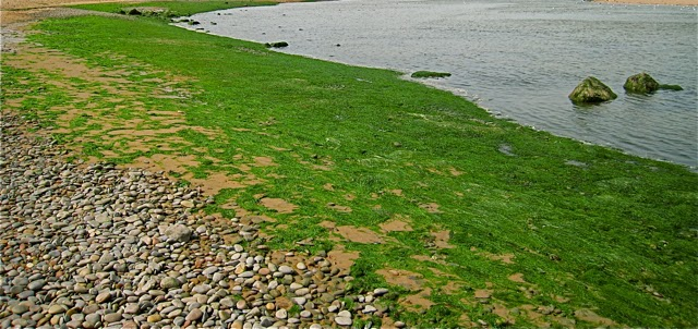 Cyanobacterial fields forever