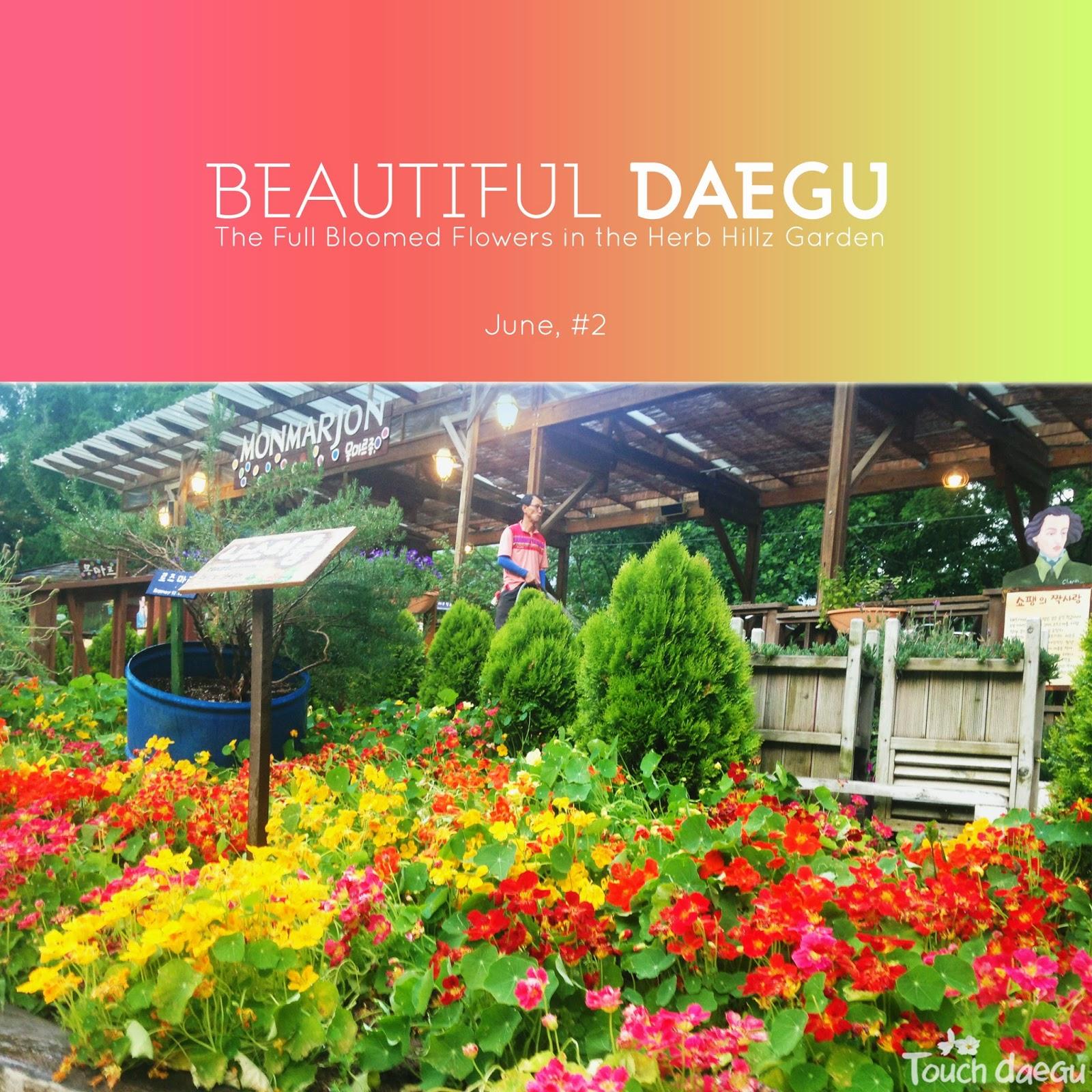 The full bloomed flowers in the Herb Hillz Garden in Daegu