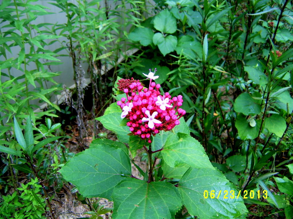 Alabama Rose and Flower Garden from a Non-Green Thumb: Journal Notes ...
