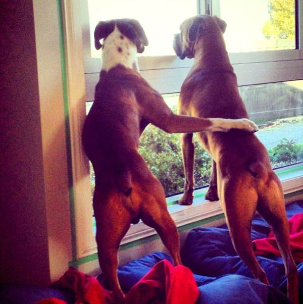 Funny animals of the week - 13 September 2013 (30 pics), funny photos of animals, animal photo, animal pics
