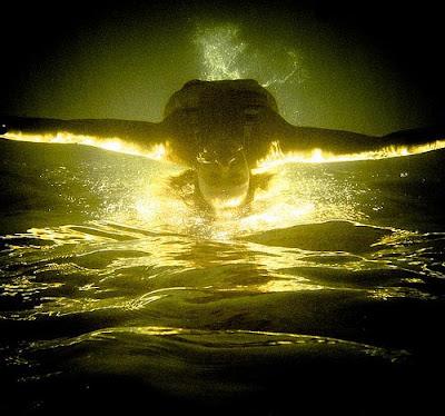 Fantastic underwater photography روعة التصوير تحت الماء
