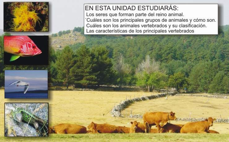 http://www.clarionweb.es/5_curso/c_medio/cm502/cm50201.htm