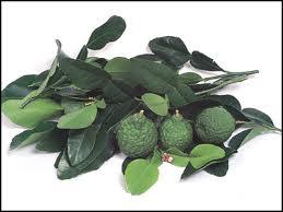 7 Herba dan Rempah Bagus Untuk Lawan Sakit Kanser