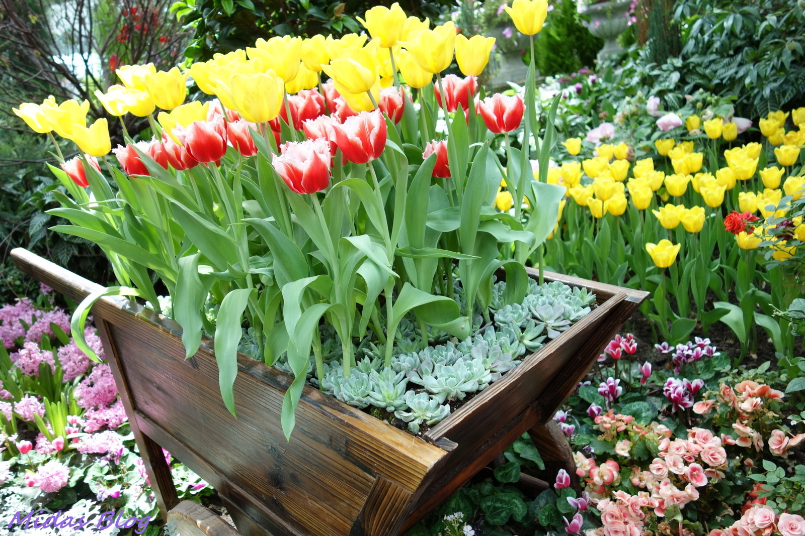 Garden By The Bay Aircon midas food n travel blog: tulipmania @gardensthe bay