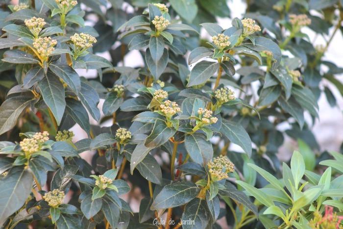 Flores y plantas de invierno en exterior e interior guia for Arbustos de exterior resistentes