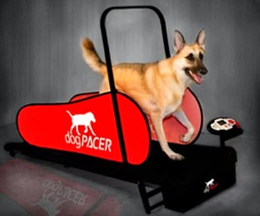 how to train dog to walk on treadmill safely