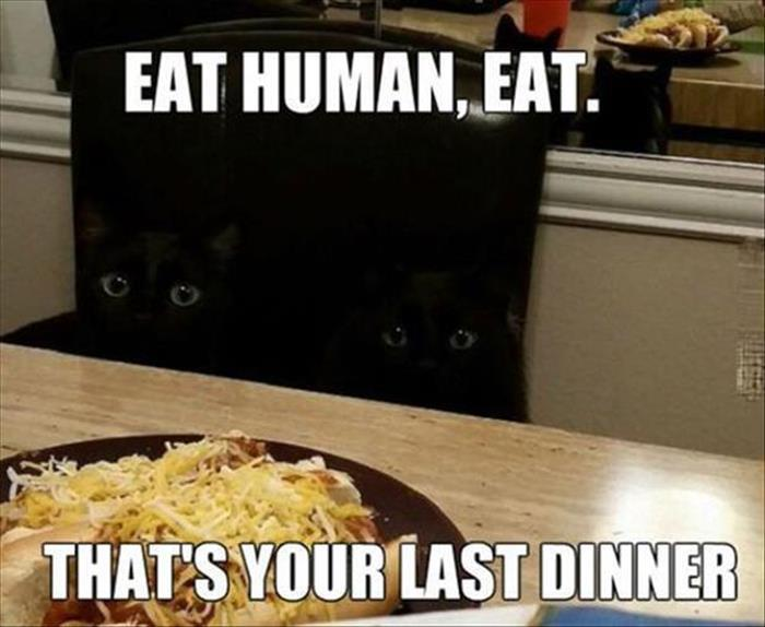 30 Funny animal captions - part 43, funny animal pictures with captions, funny captioned picture