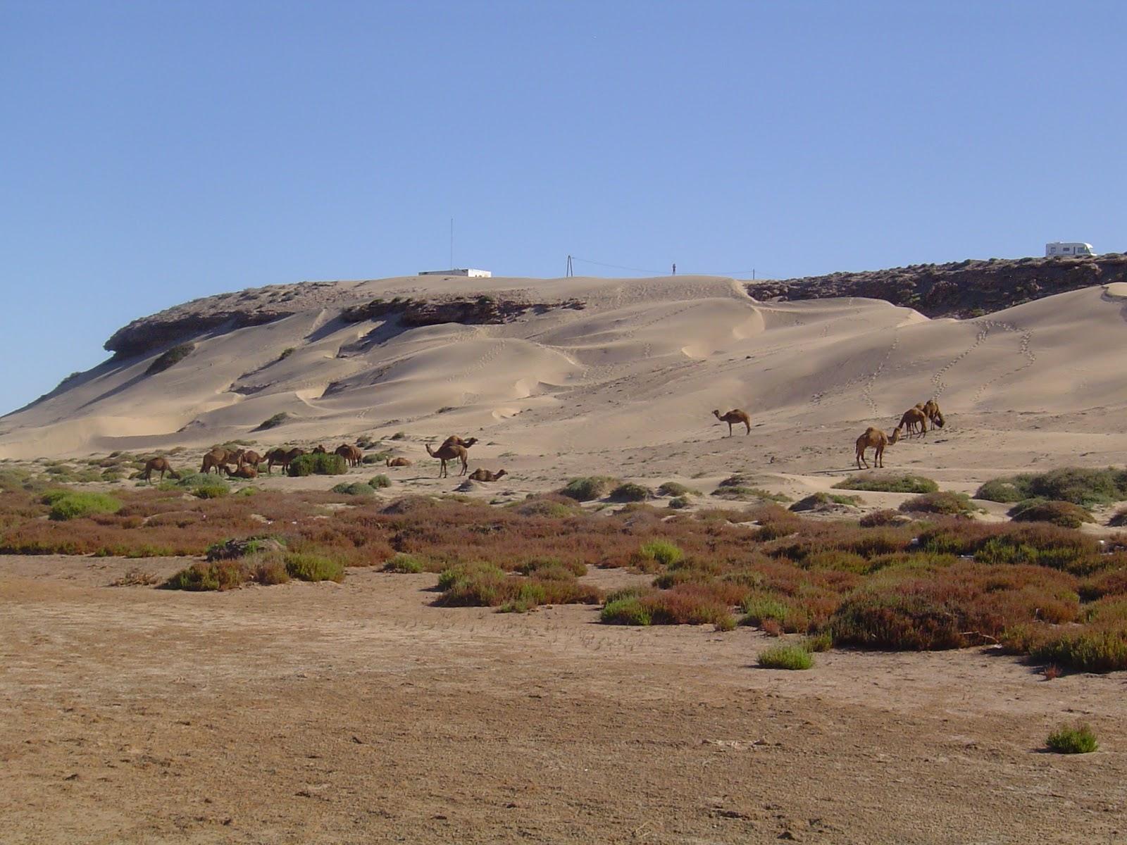 Maumag au Maroc: PLAGE BLANCHE