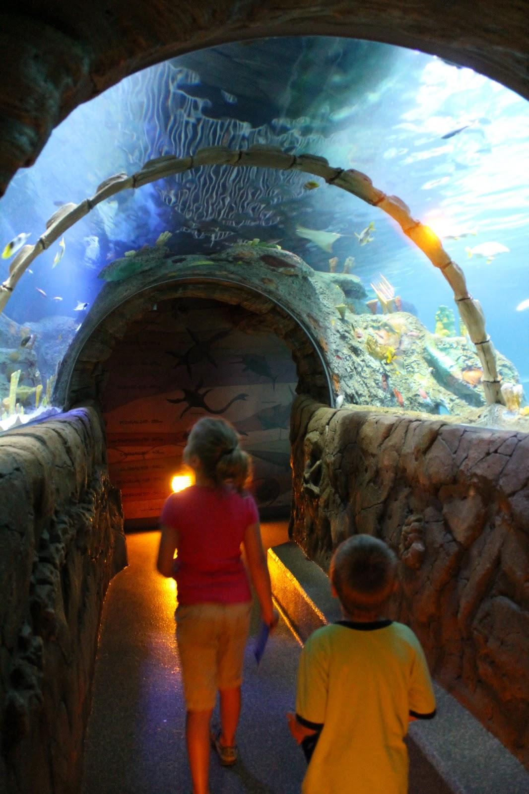 adventures among us sea life aquarium kansas city mo. Black Bedroom Furniture Sets. Home Design Ideas