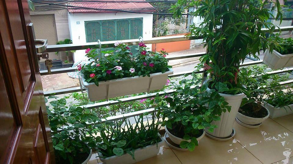Móc sắt treo chậu nhựa nhật thông minh trồng hoa lan can