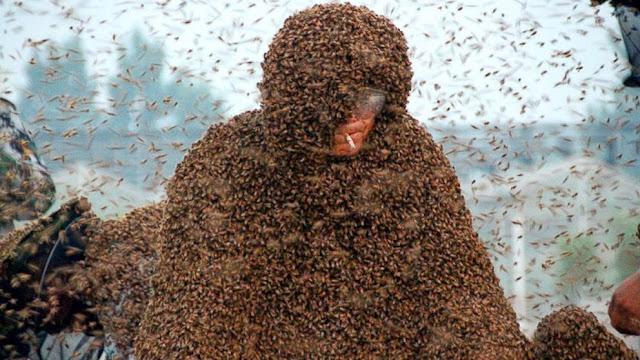 http://www.liataja.com/2015/05/pria-ini-pecahkan-rekor-tahan-dalam-1-jutaan-kerumunan-lebah.html