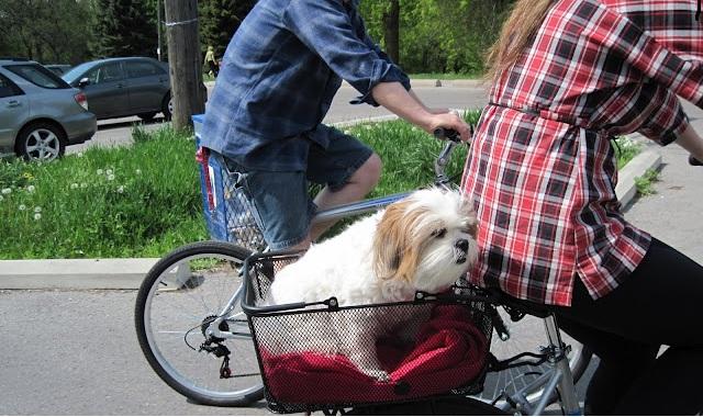 Bolsa Para Levar Cachorro Na Bicicleta : De mala e cuia para toronto bikes nossa opcao