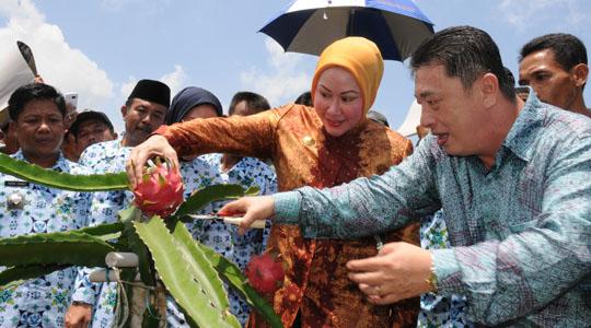Mbak Atut & Buah Naga Calon Unggulan Hortikultura Banten 2011: Marissa Haque & Ikang Fawzi