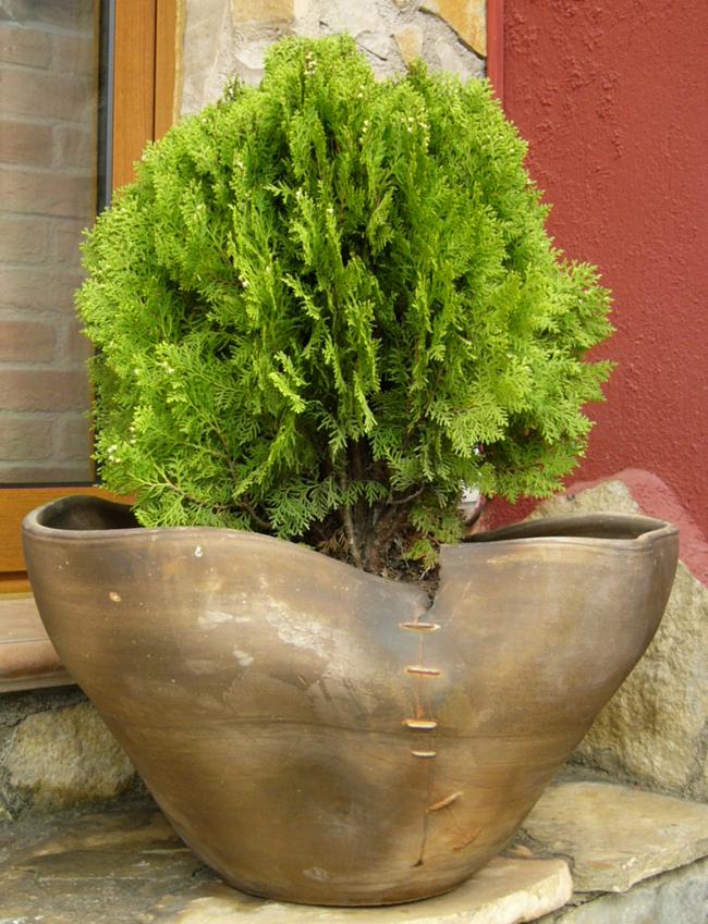 Alfareria en honduras for Arboles enanos para jardin