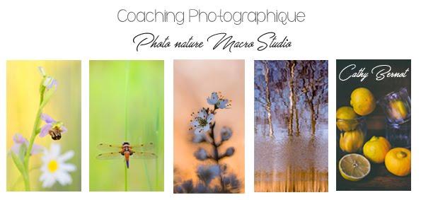 Photographe professionnelle d'art et de nature | Stages et coaching photo tous niveaux