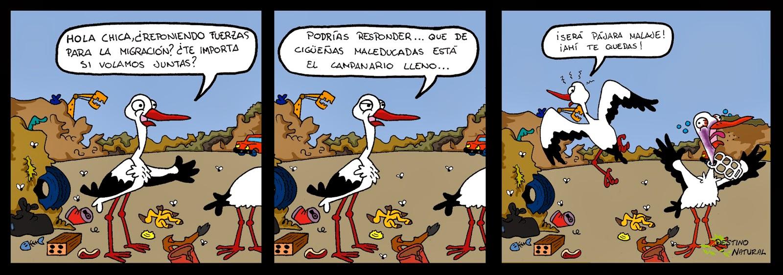 Cigüeñas en el vertedero