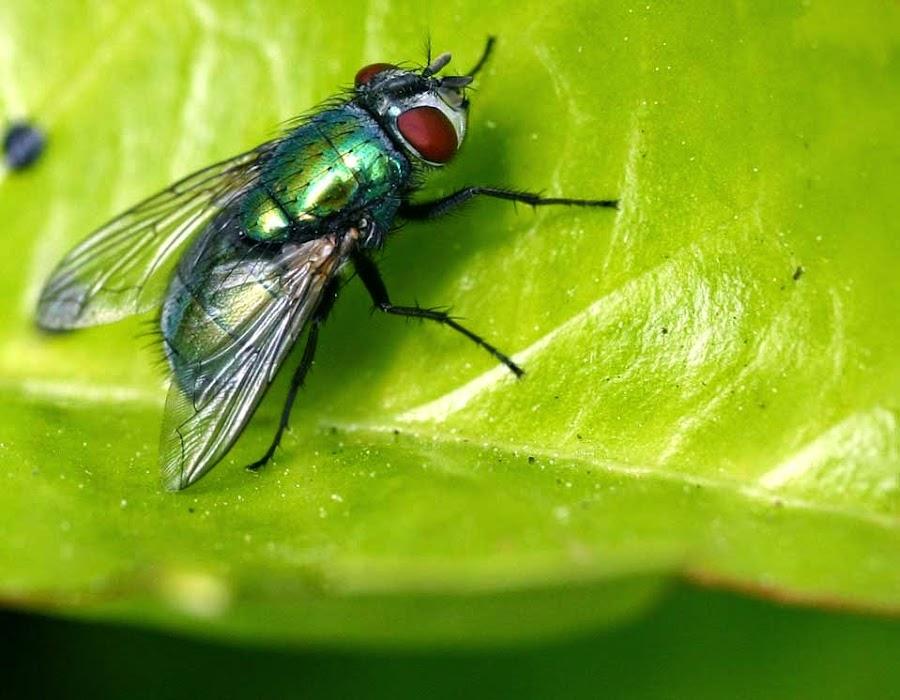 Eliminar mosca blanca - Como combatir las moscas ...