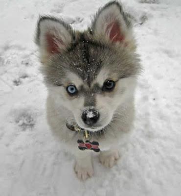 Fotos-de-cachorros-filhotes