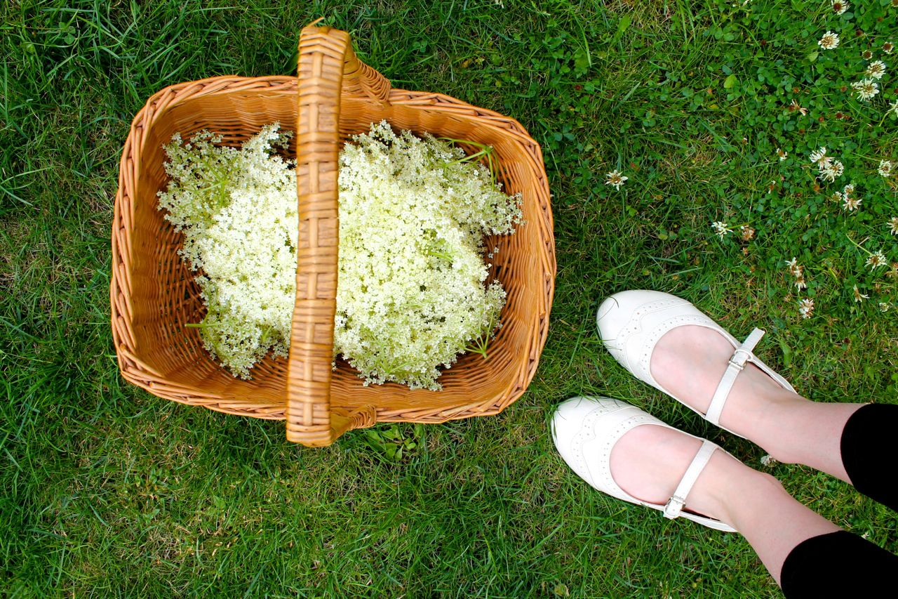 elderflower cordial diy